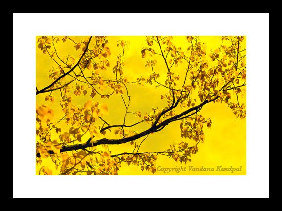 golden hues